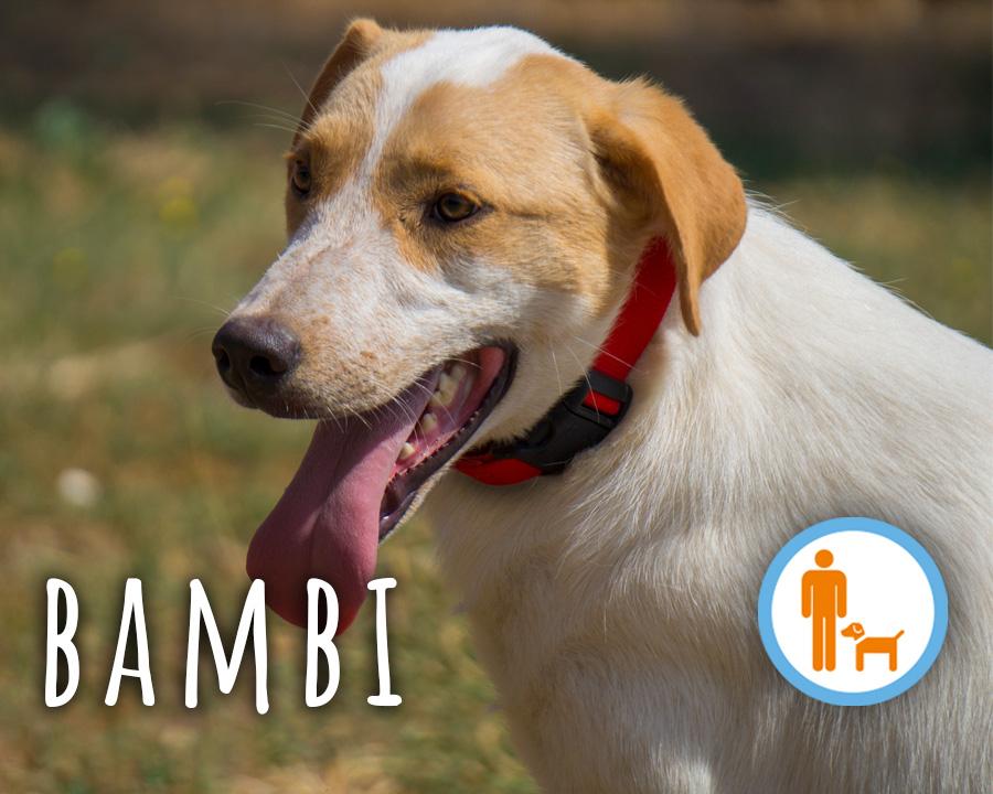 Bambi_profilo_2