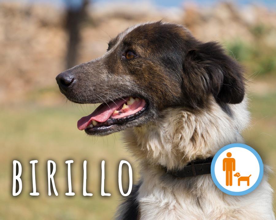Birillo_profilo_2