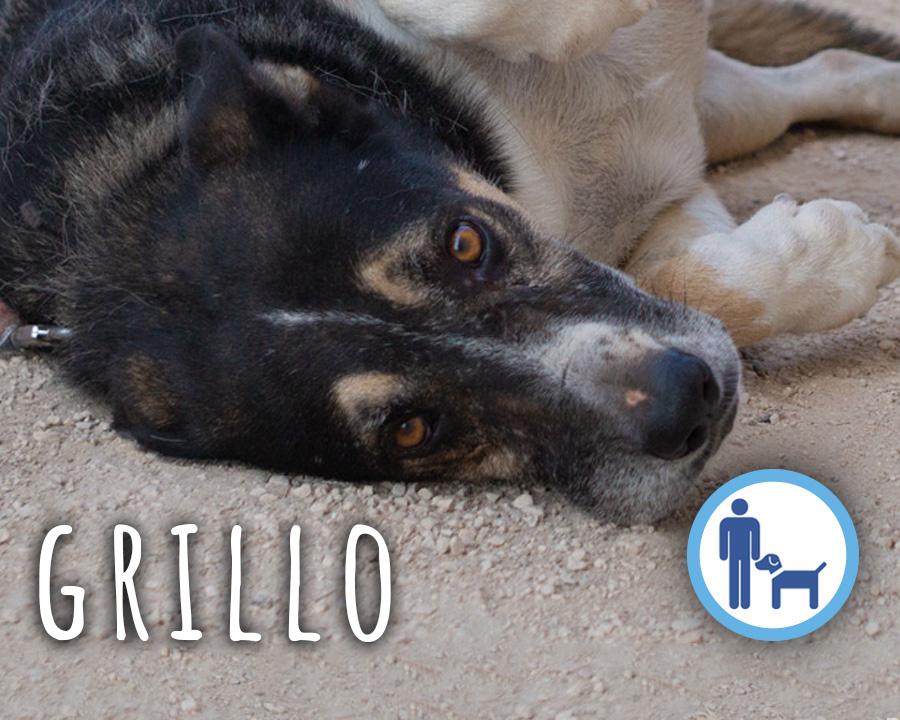 Grillo_profili_2_1