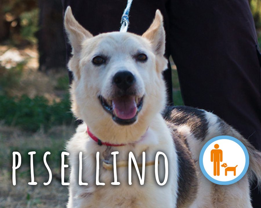 Pisellino_profilo_2