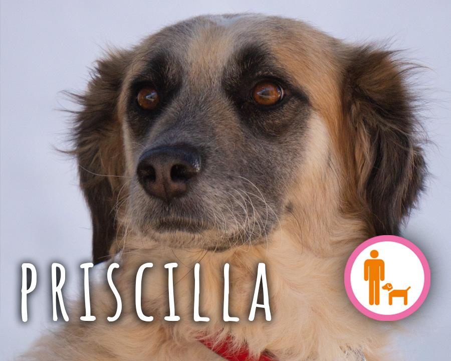 Priscilla_profilo_2