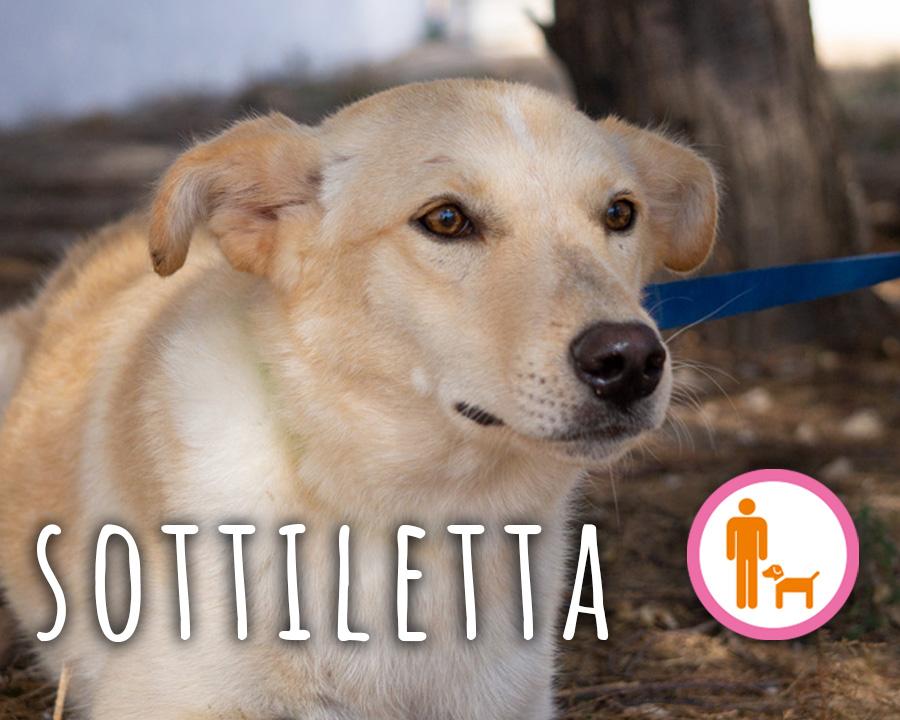 Sottiletta_profilo_2