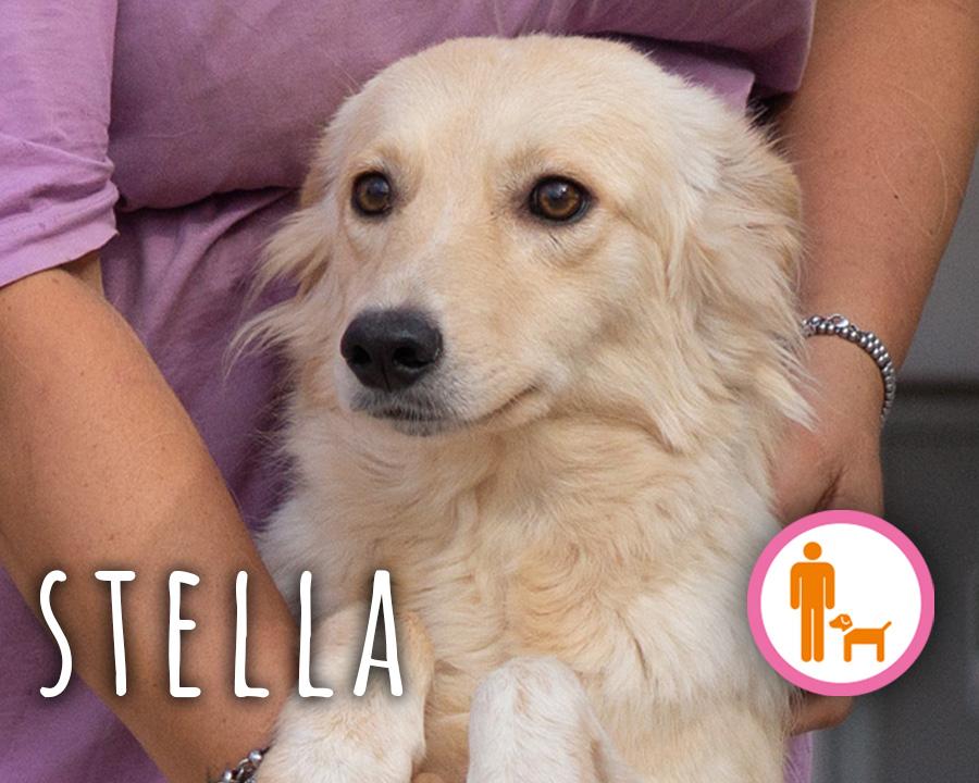 Stella_profilo_2