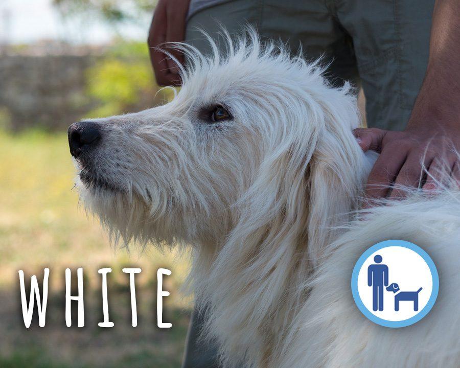 White_profilo_2