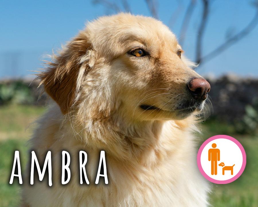 Ambra_profilo
