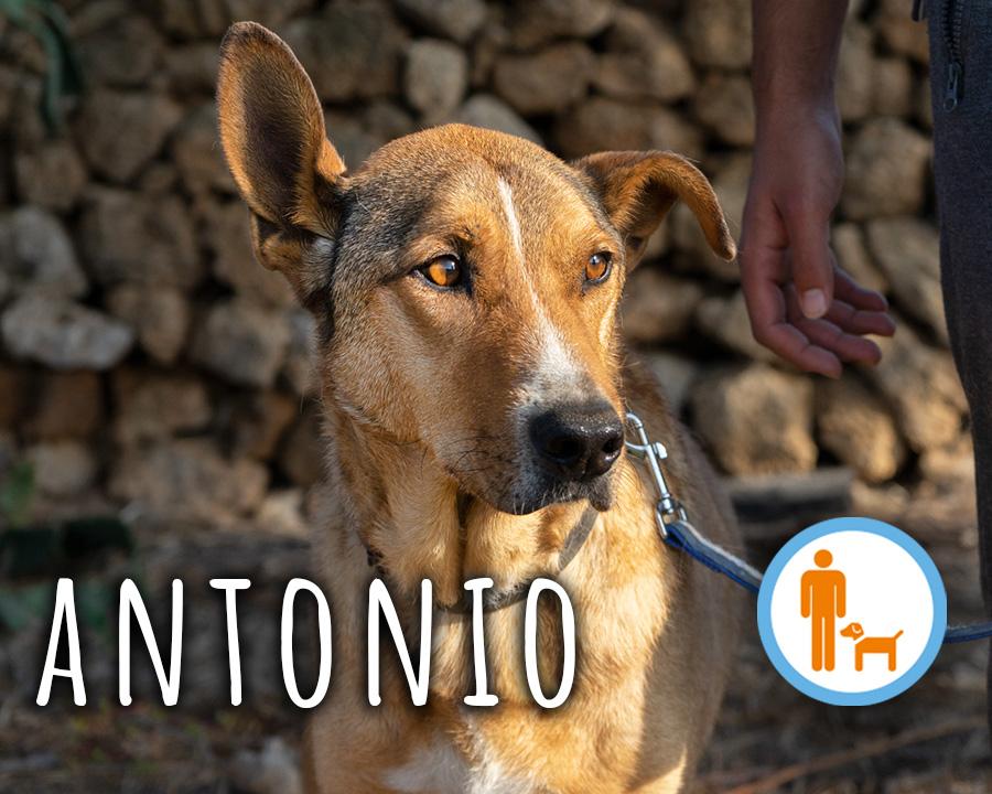 Antonio_profilo_2