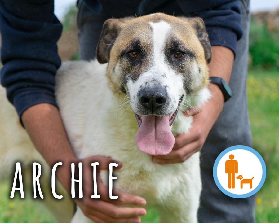 Archie_profilo