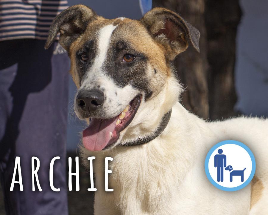 Archie_profilo_2