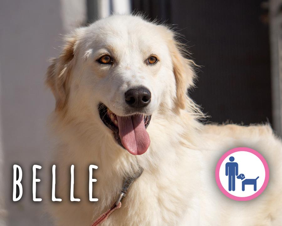 Belle_profilo_2