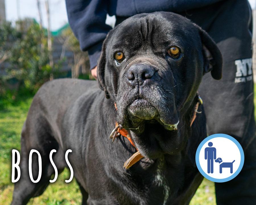 Boss_profilo