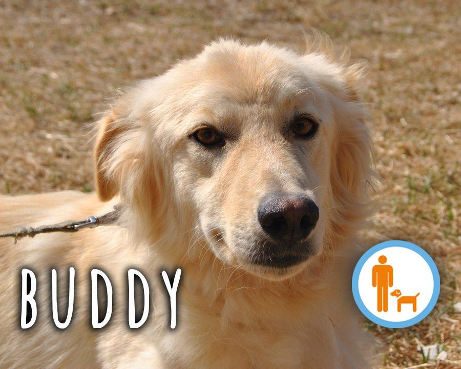 Buddy_profilo