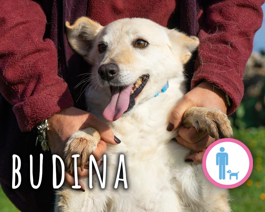 Budina_profilo