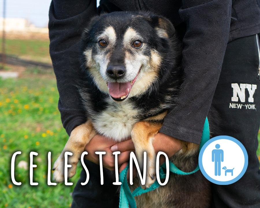 Celestino_profilo