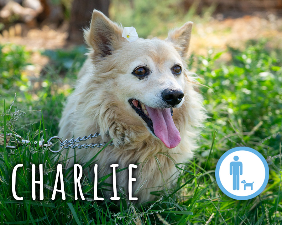 Charlie_profilo