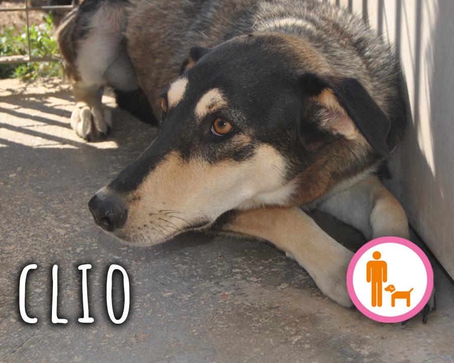 Clio_profilo