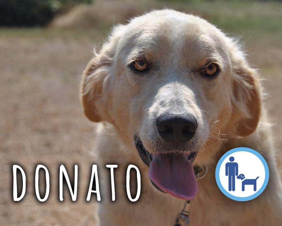 Donato_profilo_grande