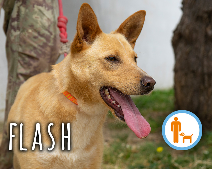 Flash_profilo