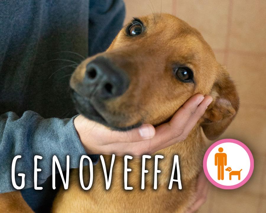 Genoveffa_profilo