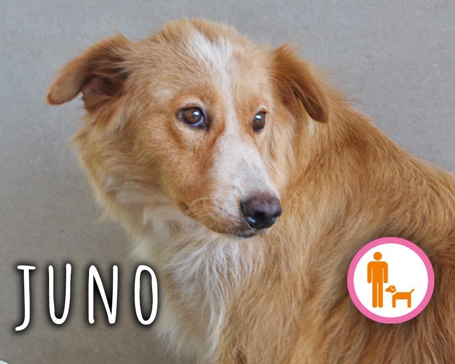 Juno_profilo