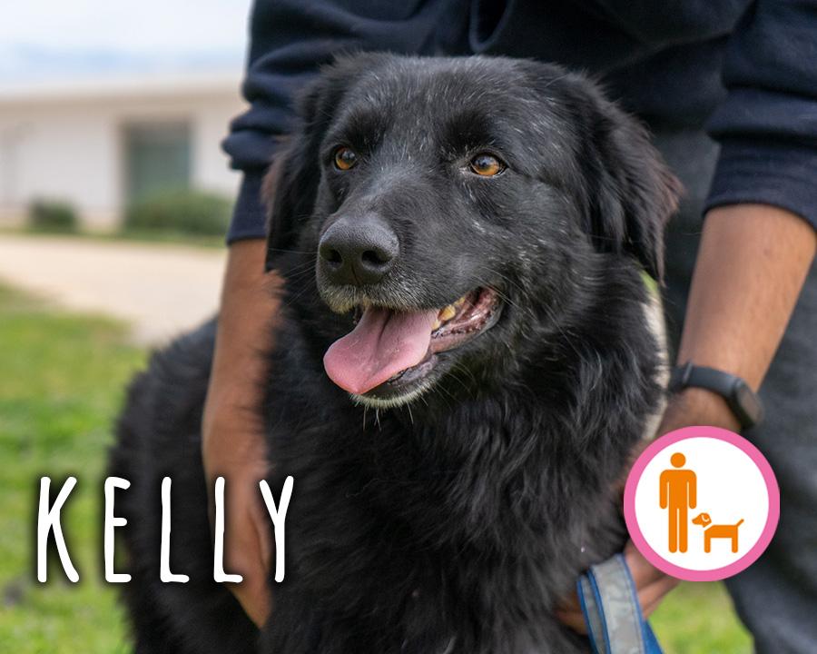 Kelly_profilo