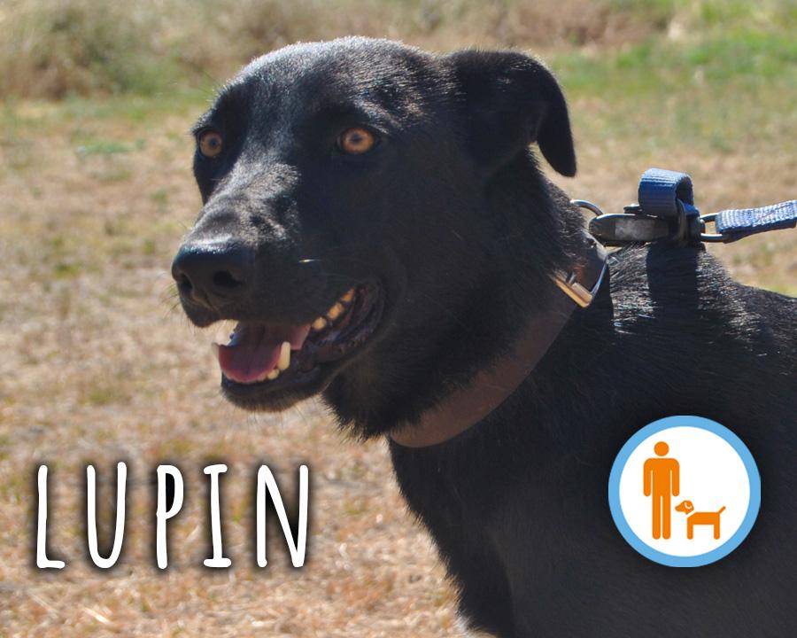 Lupin_profilo