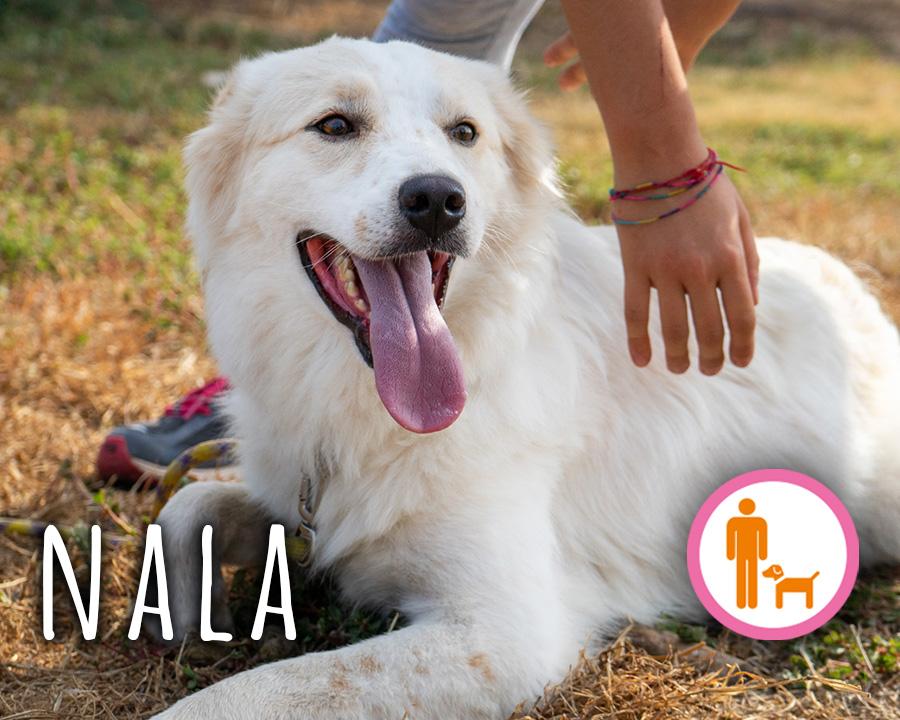 Nala-profilo