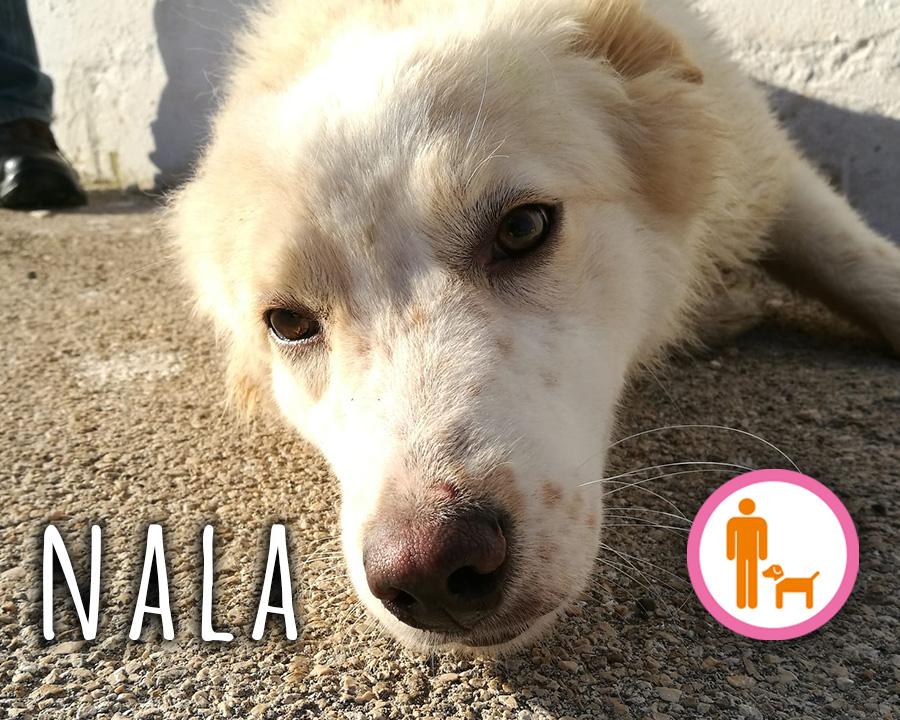Nala_profilo