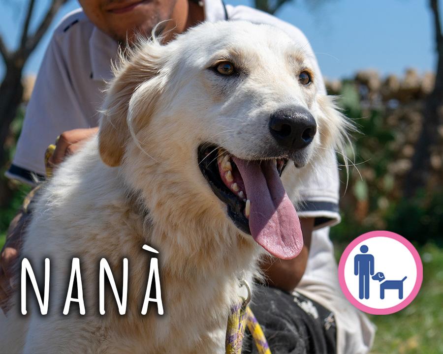 Nanà_profilo