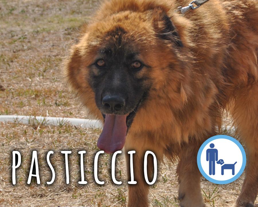 Pasticcio_profilo_grande
