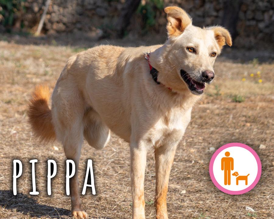 Pippa_profilo