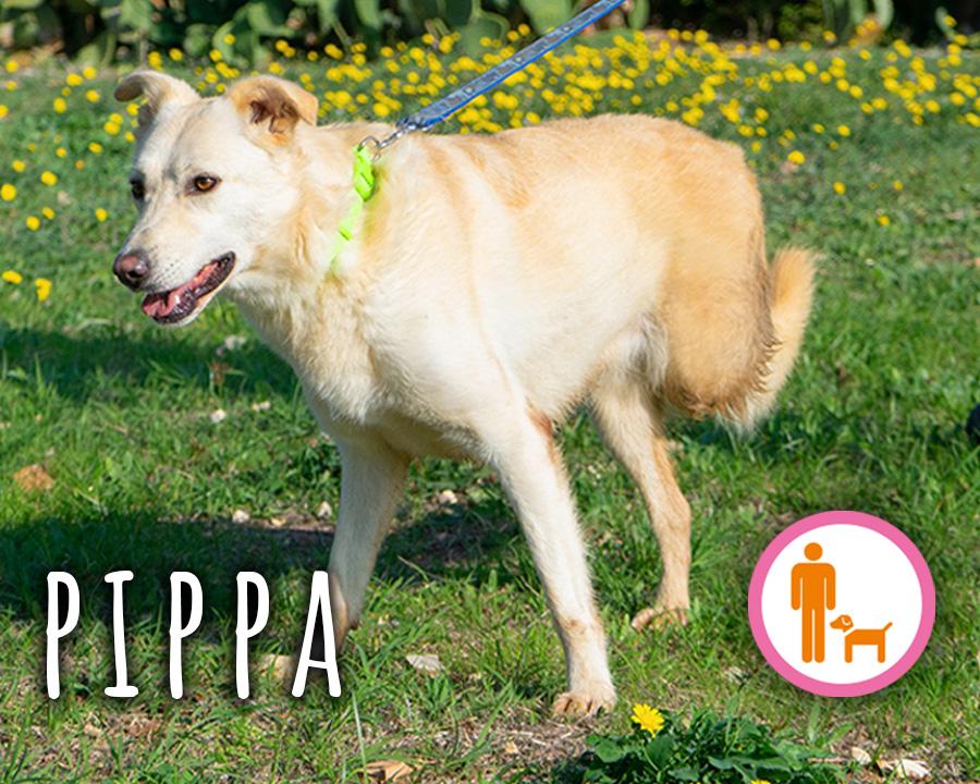 Pippa_profilo_1