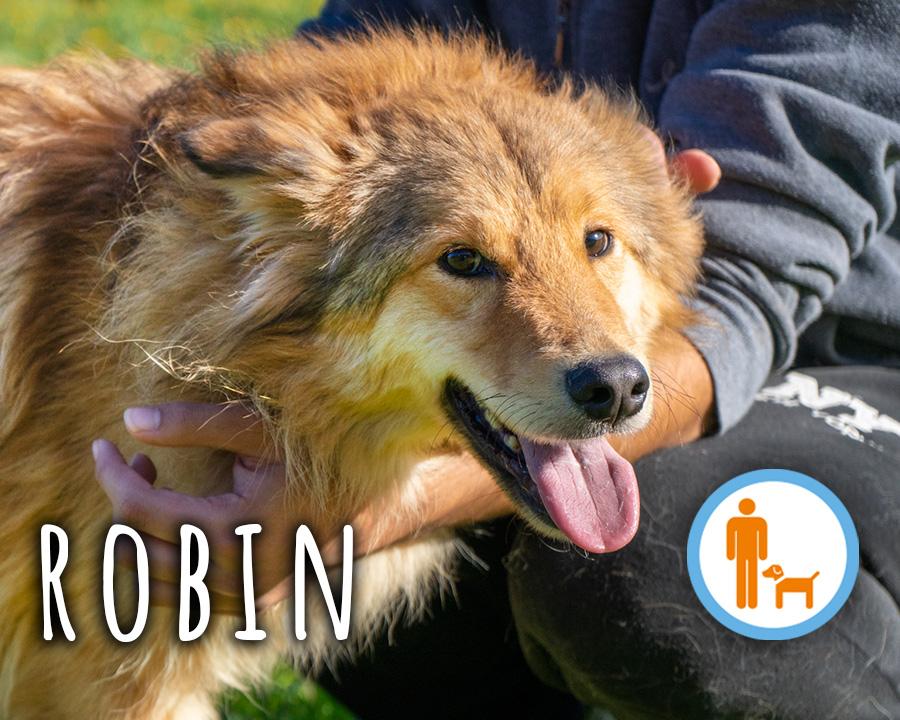 Robin_profilo