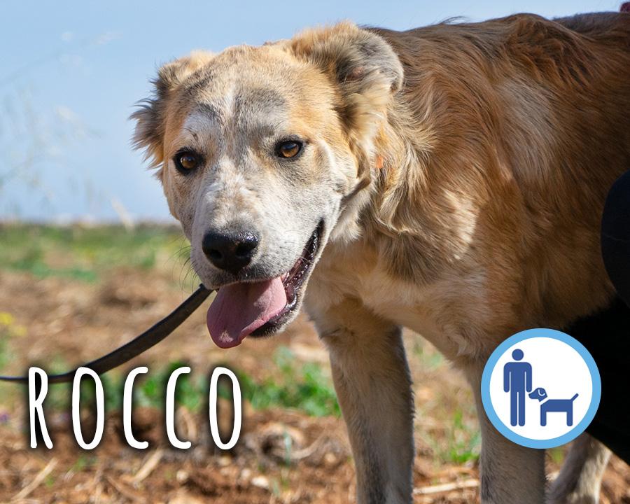 Rocco_profilo