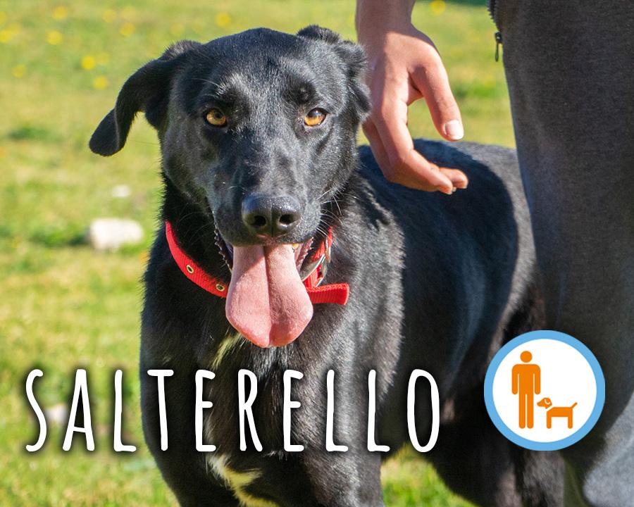 Salterello_profilo
