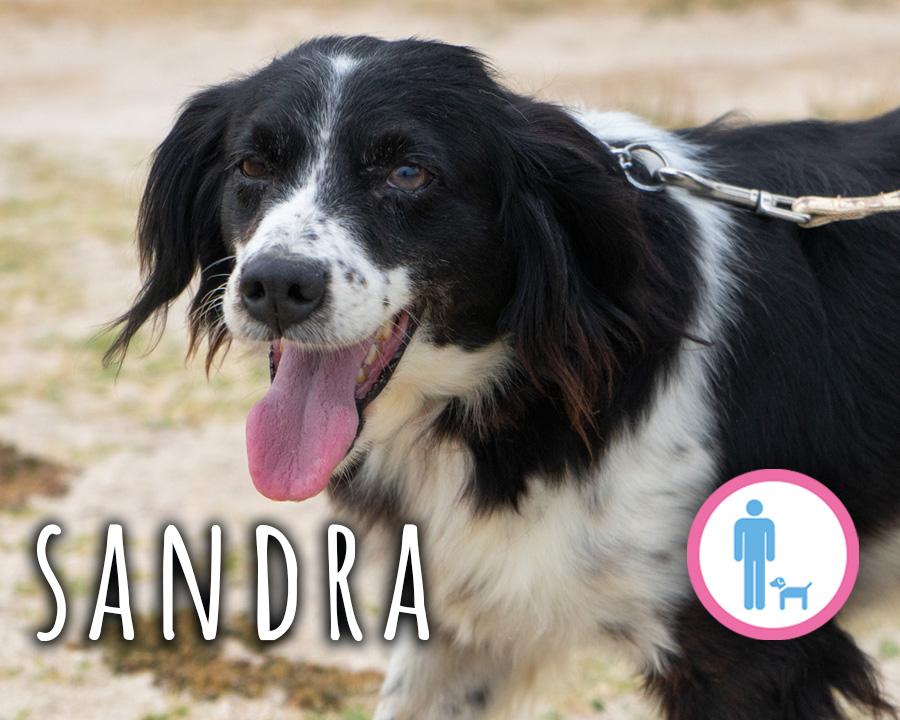 Sandra_profilo