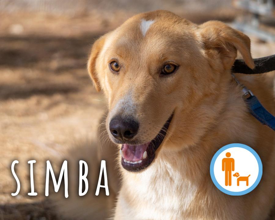 Simba_profilo_2