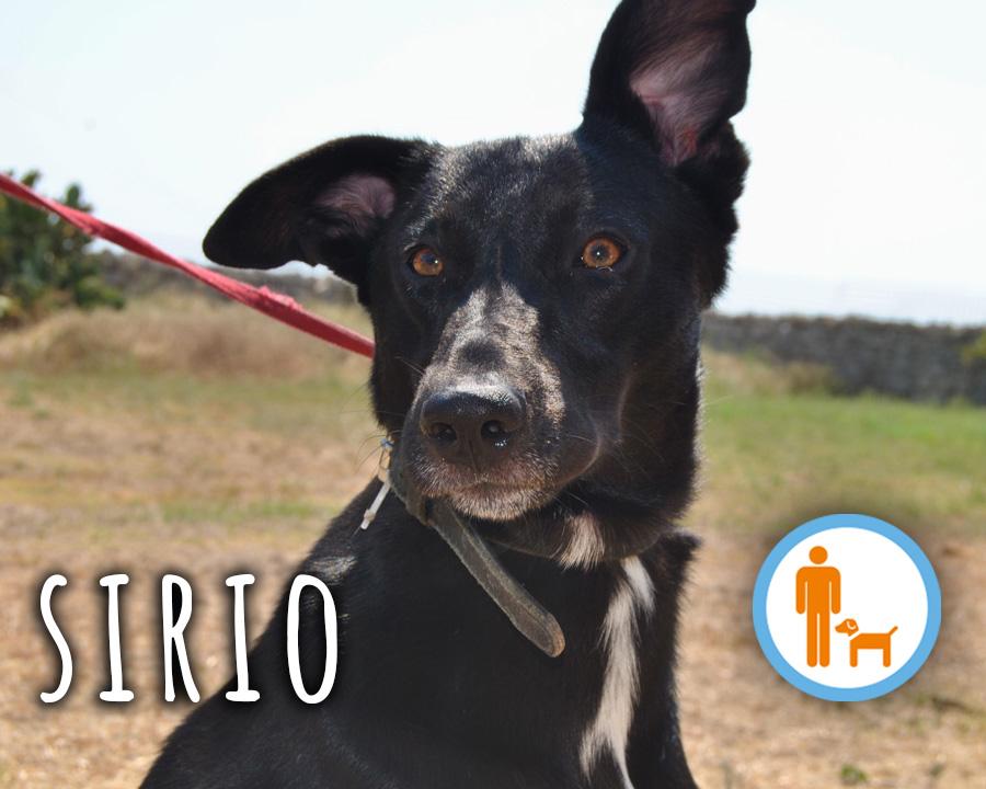 Sirio_profilo