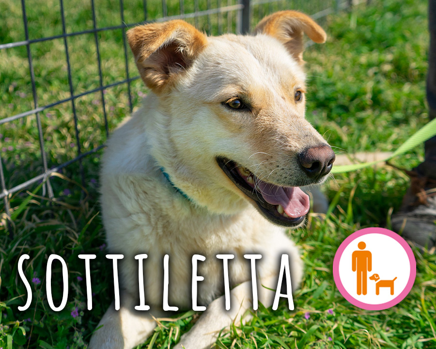 Sottiletta_profilo