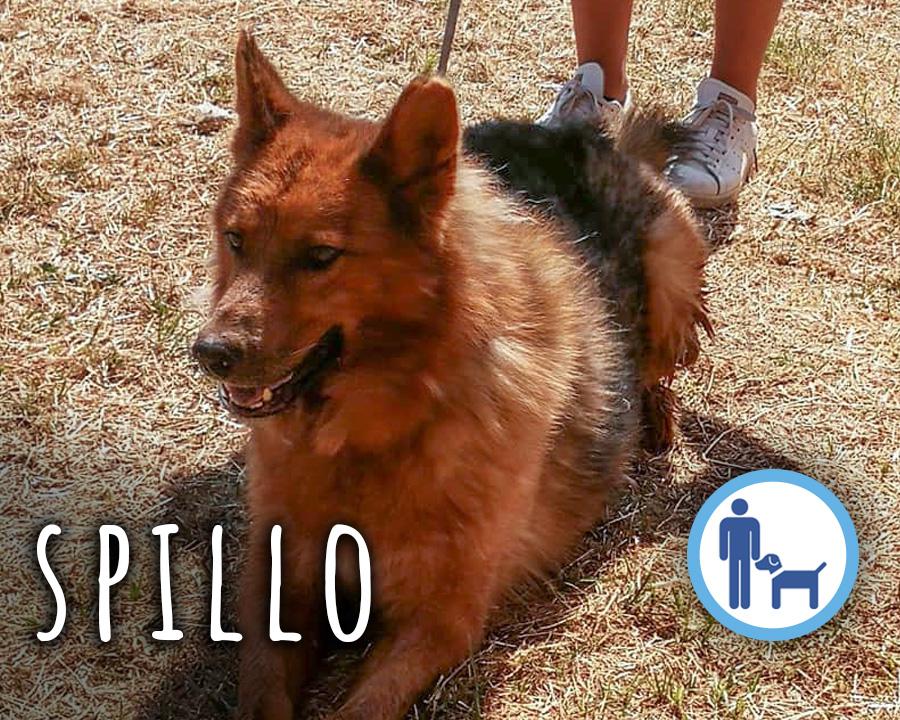 Spillo_profilo