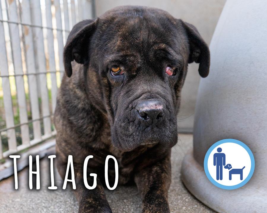 Thiago_profilo