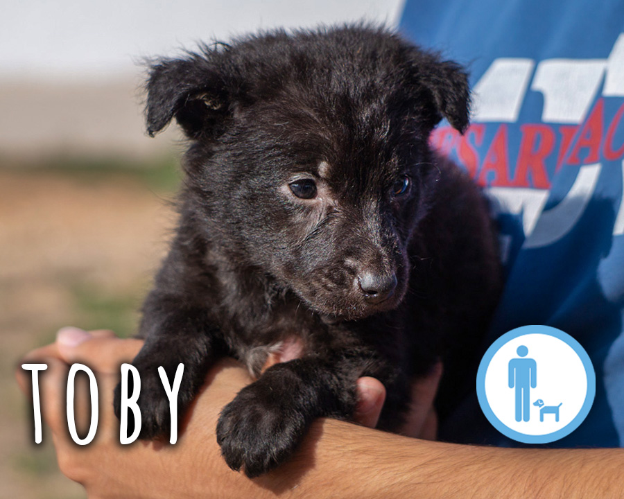 Toby_profilo_2