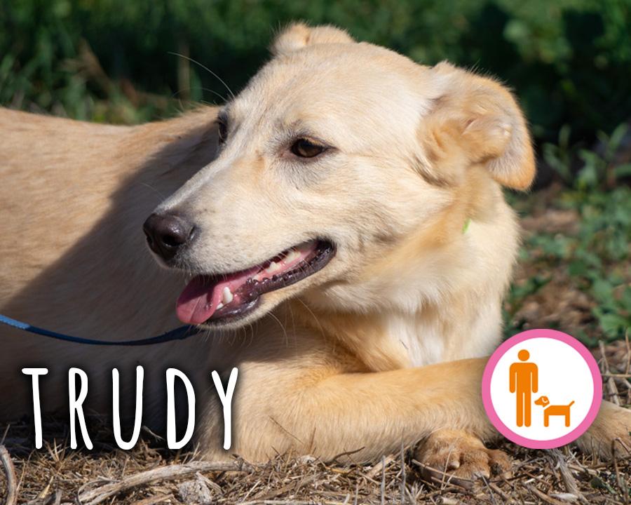Trudy_profilo