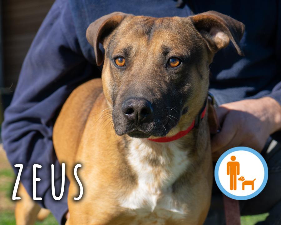 Zeus_profilo