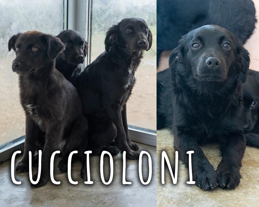 cuccioloni_profilo