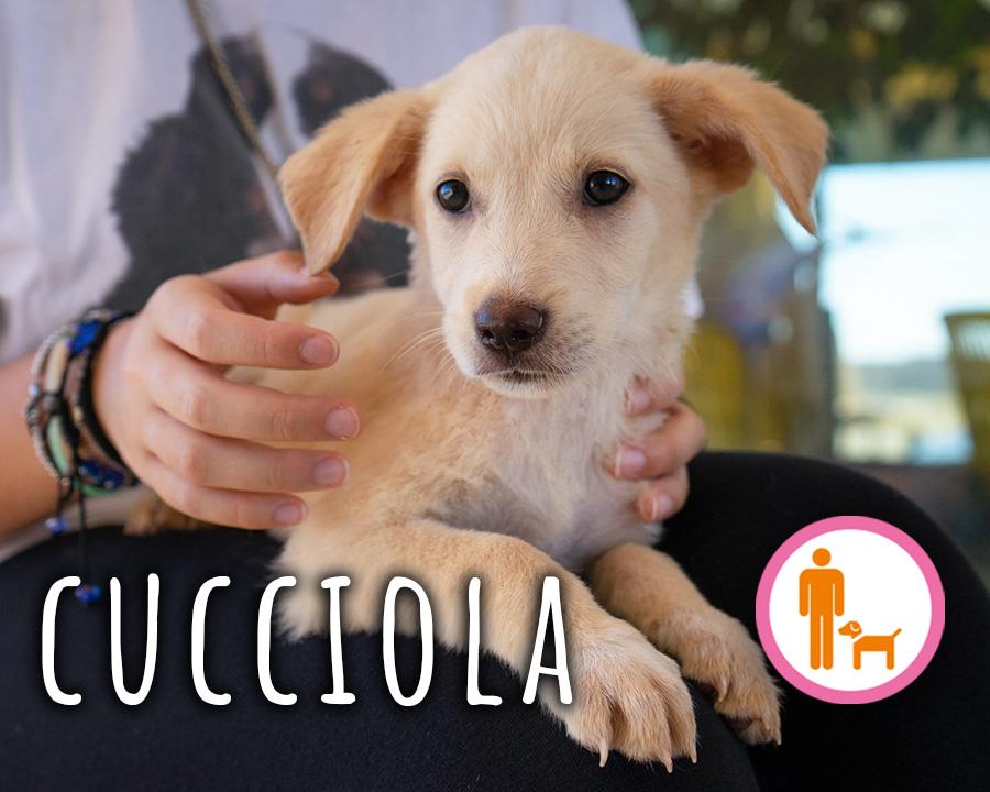 profilo_cucciola_4