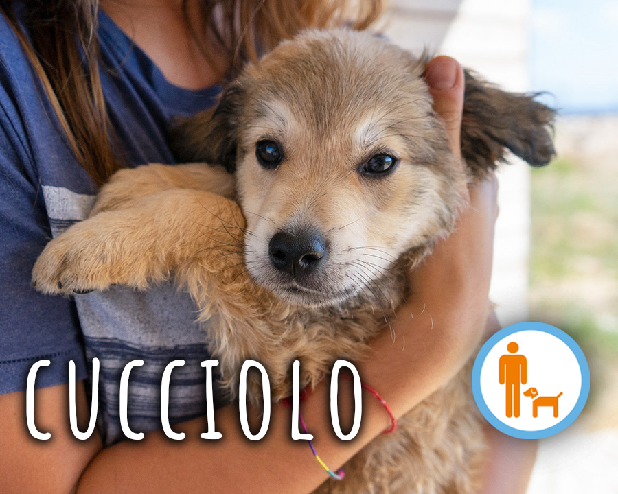 profilo_cucciolo