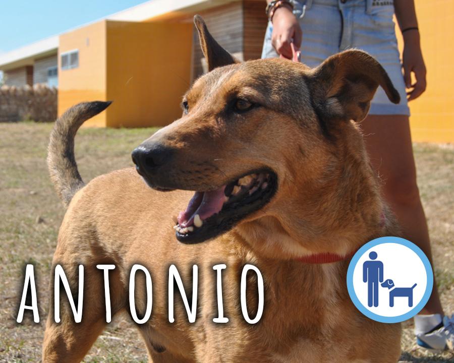 Antonio_profilo