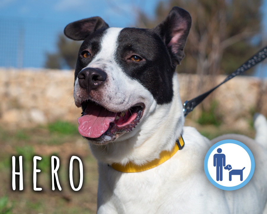 Hero_profilo