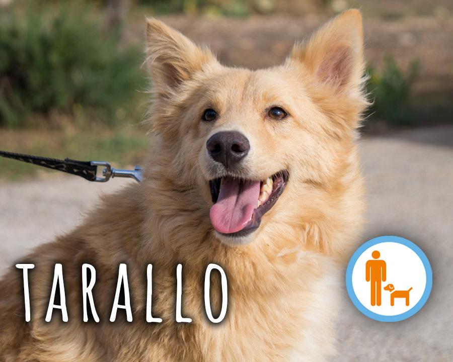 Tarallo_profilo