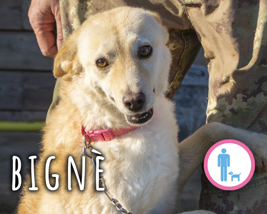 Bignè_profilo